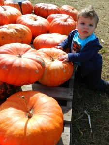 Eleven month old Lucas Smith of Enfield picks out baby's first pumpkin at Brown's Harvest in Windsor, CT.