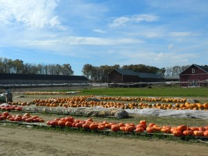 Brown's tobacco and pumpkin farm.