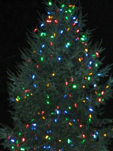 a 20 foot Balsam fir was donated by Jeff and Dianne Hedrick for the annual Tree Lighting in Downtown Manchester, Connectiuct.