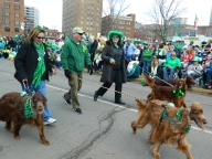Beautiful Irish Setters were a crowd pleaser.