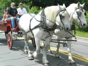 Horse drawn wagon rides were a part of the 100th anniversary of Homeland/Heritage Day in Manchester, CT.