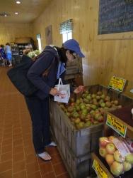 Apples galore.