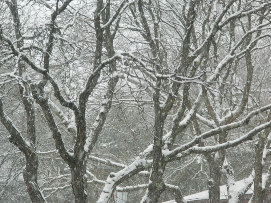 Photo by Jacqueline Bennett A fresh New England snowfall on the first day of spring March 20, 2015.